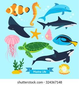 Marine Life Vector Design Illustration