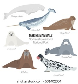Marine mammals set of Greenland national park. Polar animals. Walrus, narwhal, harp, bearded, hooded, ringed seal, beluga whale arctic collection