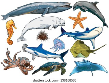 marine, sea, aquatic animals of ocean and marine species, sea creatures