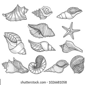 hand drawn vector illustrations collection of seashells perfect for invitations