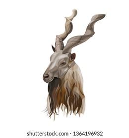 Markhor head portrait. Screw horn goat. Vector illustration isolated on white background