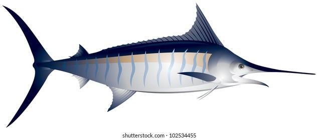 Marlin, ocean fish vector illustration, Atlantic blue marlin, Makaira nigricans, sporting fishing in the tropical seas
