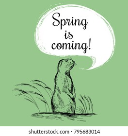 Marmot sketch vector illustration. Spring is coming. Groundhog Day