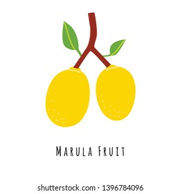 Marula fruit flat vector illustration. Cartoon slices of exotic, tropical fresh fruit. Clipart with typography. Isolated icon for healthy cooking menu, logo design element