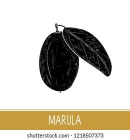 Marula. Fruit, leaf. Monophonic. Black silhouette on white background.