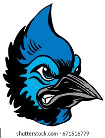 Mascot Blue Jay head, proud and tough, which gives tribute to traditional school mascots but with a new look and attitude. Suitable for all sports.