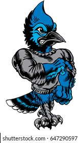 Mascot Blue Jay, strutting, proud and tough, which gives tribute to traditional school mascots but with a new look and attitude. Suitable for all sports.