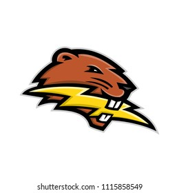 Mascot icon illustration of head of a North American beaver, a large, primarily nocturnal, semi-aquatic rodent, biting a lightning bolt or thunderbolt side view on isolated background in retro style.