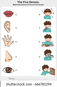 Math the picture  to the correct five senses - touch, taste, hearing, sight, smell.  - worksheet for education