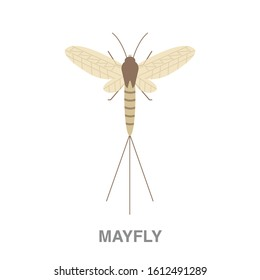 Mayfly flat icon on white transparent background. You can be used mayfly icon for several purposes.