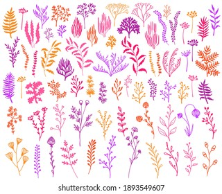 Meadow flowers, tree branches, algae water plants, corals isolated on white. Seaweeds polyps silhouettes set. Branches berries twigs flowers. Seaweeds coral reef underwater plans vector collection.