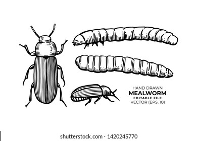 Mealworms hand drawn vector illustrations