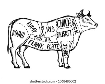 meat diagram cow engraving vector illustration  scratch board style  imitation  black and white hand
