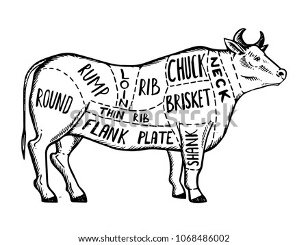 Meat Diagram Cow Engraving Vector Illustration Stock Vector Royalty
