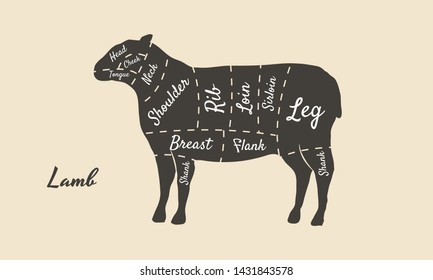 Meat diagram. Cuts of meat. Lamb silhouette isolated on white background. Vintage poster for butcher shop, restaurant menu. Vector illustration