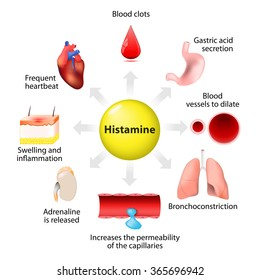 Mechanism of action of histamine and target organs. immune responses
