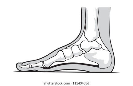 Foot Anatomy Images Stock Photos Vectors Shutterstock