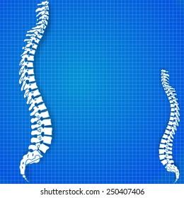 medic spine human on the blueprint