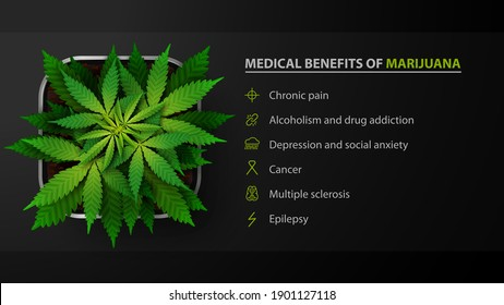 Medical benefits of marijuana, black poster with bush of cannabis in a pot, top view. Medical uses for marijuana, benefits of use