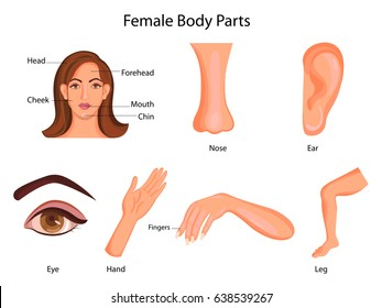 Medical Education Chart of Biology for Female Body Parts Diagram. Vector illustration