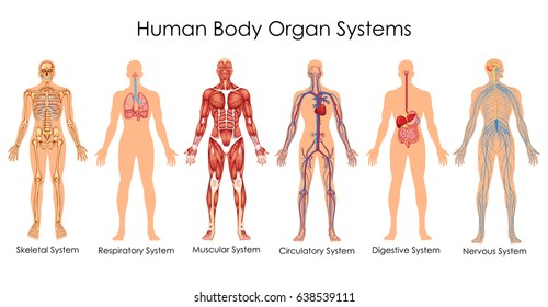 Human Body Anatomy Images, Stock Photos & Vectors | Shutterstock