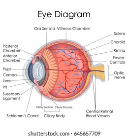 Realistic eye diagram science all kind of wiring diagrams realistic eye diagram science images gallery ccuart Images