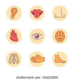 Medical icons thin line set. Human organs, senses, and body parts. Flat style color vector symbols isolated on white.