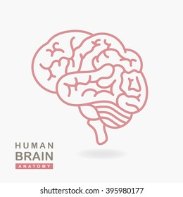 Medical illustration showing the structure of the human brain. Vector human brain side view. Human brain in lineal flat style. Human brain and body anatomy. Infographic, template, layout, elements.