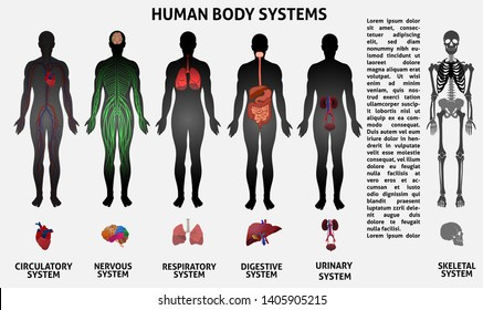 Medical infografics. realistic human organs and human body. Medical concept with icons collection. Template.Vector illustration.