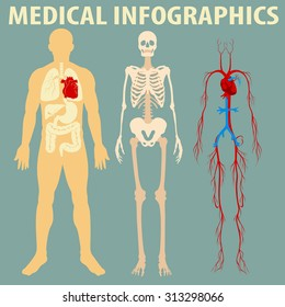 Medical infographic of human body illustration