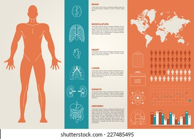 Medical Infographic set with organs , charts and other elements