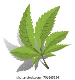 medical marijuana, cannabis green leaf black color logo. vector illustration.