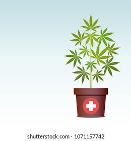 Medical marijuana or cannabis in pot. Green Herbs in a pot. Growing cannabis. Drug consumption, marijuana use. Useful properties of marijuana. Isolated vector illustration with copy space.