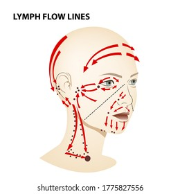Medical poster. Lymphatic flow on the face and neck of a person, vector diagram of lymphatic drainage.