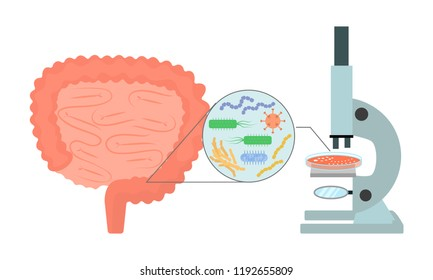 Medical research of intestinal microflora   vector illustration