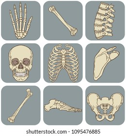 Medical vector illustration of the human bones pack