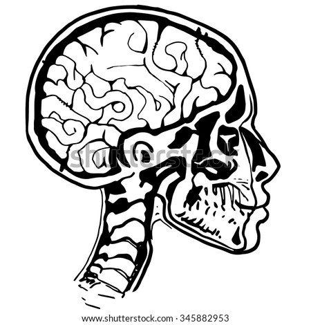 Medical Xray Scan Male Human Head Stock Vector Royalty Free