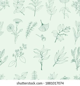 Medicinal herbs seamless pattern. A set of medicinal herbs and plants. Collection of hand drawn flowers and herbs. Botanical plant illustration. Vintage medicinal herbs sketch.