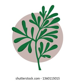 Medicinal plant (Ruta graveolens). Botanical vector illustration. Can be used for cards, invitations or like sticker.