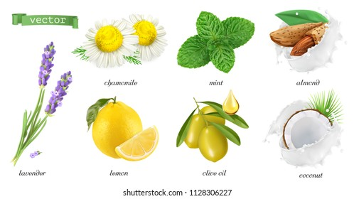 Medicinal plants and flavors, chamomile, mint, lavender, lemon, almonds, coconut, olive oil. 3d realistic vector icon set