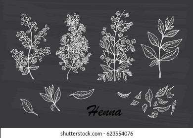 Henna Mehndi Vector : Henna plant images stock photos & vectors shutterstock