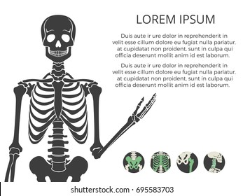 Medicinal poster or banner with human skeletone and bones. Vector illustration