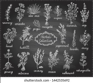 Medicine herbs collection, hand drawn graphic doodle illustration on a chalkboard