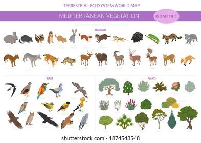 Mediterranean vegetation biome, natural region infographic. Terrestrial ecosystem world map. Animals, birds and vegetations isometric design set. Vector illustration