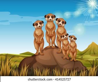 Meerkats standing on rock illustration