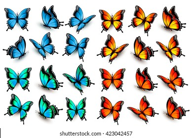 Mega collection of colorful isolated butterflies. Vector