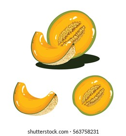 Melon Fruit Fresh Realistic Vector Illustration