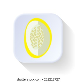 Melon fruit vector graphic illustration design art