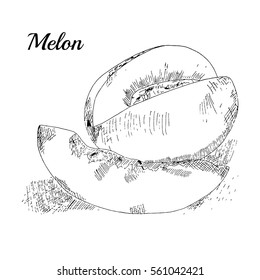 Melon hand drawn. Vector Illustration.