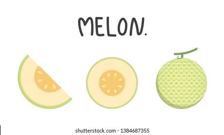 melon vector. melon on white background. wallpaper.